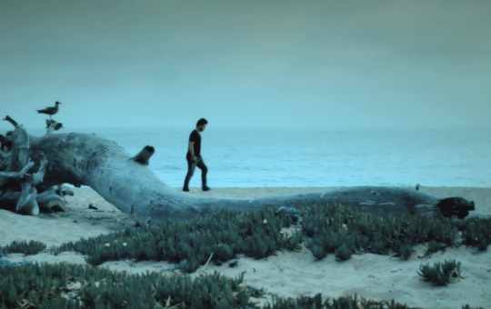 DAVID COOK – The Last Goodbye