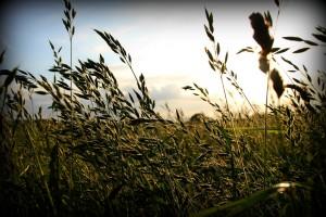 Summer in Norfolk